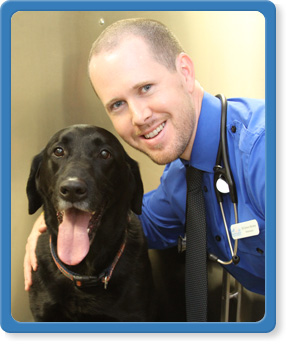 animal hospital in south jacksonville