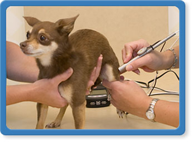 jacksonville veterinary laser therapy