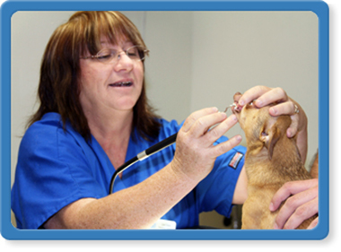 jacksonville pet dental care